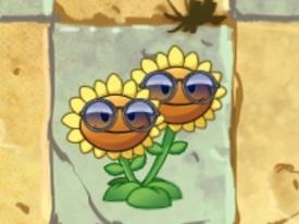 File:SunflowerShades.jpg
