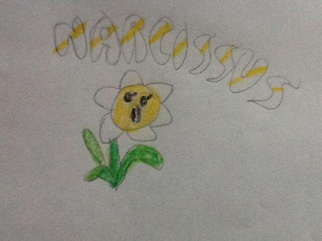 File:NarcissusDrawing.jpg