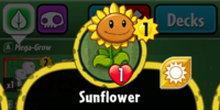 Sunflower (PvZH)/Gallery