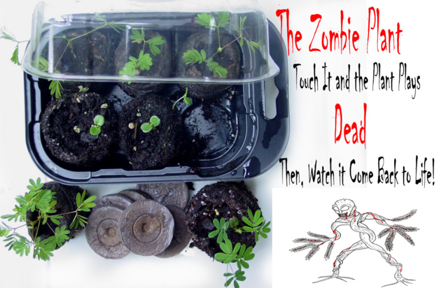 File:The Zombie Plant Grow Kit.png