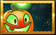Jack O' Lantern New Premium Seed Packet
