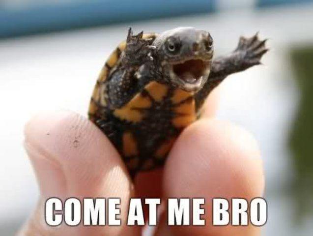 File:Come at me bro turtle.jpg