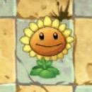 File:Sunflower2C.jpg