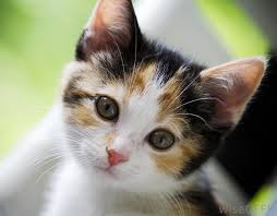File:Adorable Cat -D.jpg