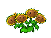 File:180px-Triple sunflower png-1-.png