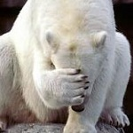 Facepalm bear.jpg