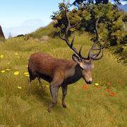 Deer new
