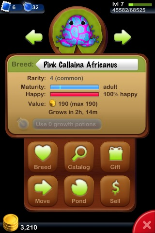 File:Pink Callaina Africanus.jpg