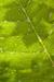 Dew Leaf Habitat