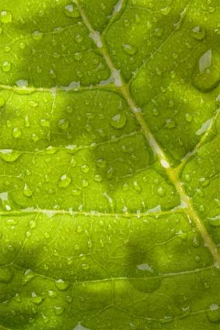 File:Dew Leaf Habitat.png