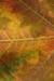 Fall Leaf Habitat