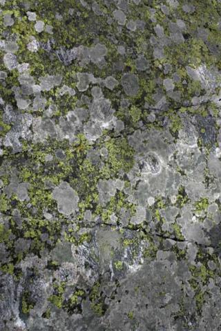 File:Lichen Habitat.PNG