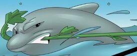 Dolphin po