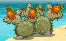 Bombcactus