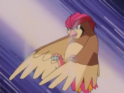 Benji father Pidgeotto Gust