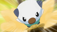 Ash Oshawott Tackle