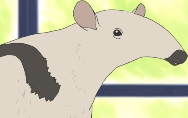 File:Anteater.jpg
