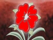 Heart flower red