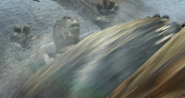 File:Tortoise John's Death.png