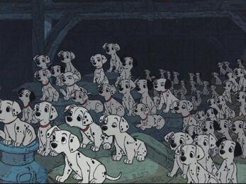 DalmatianPuppies