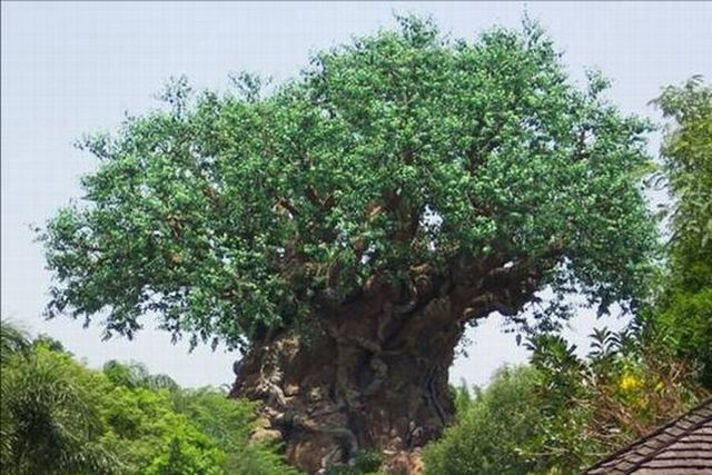 File:Tree of Life.jpg
