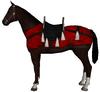 Aqs horse1