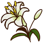 File:White Lily.png