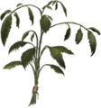 Dried-nettles-lrg.png