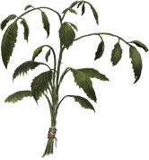 Dried-nettles-lrg