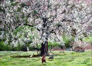 Pear-Tree-image