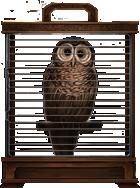 Brown-owl-lrg