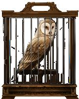 Barn-owl-lrg