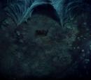 Aragog (chapter)