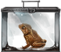 Crested-toad-lrg.png
