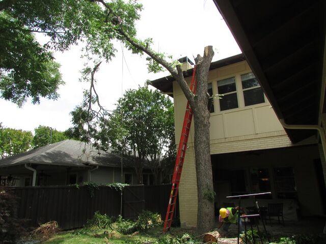 File:Dallas Tree Service - Dallas Tree Removal - 214- 556-5079.jpeg