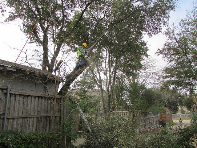 File:Dallas-tree-removal-7.jpg
