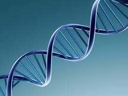 File:DNA.jpg