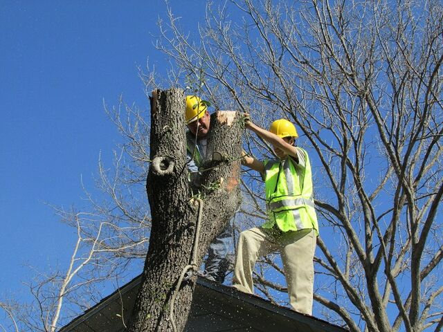 File:Dallas Tree Removal - 214- 556-5079 - DFW Tree Removal.jpeg