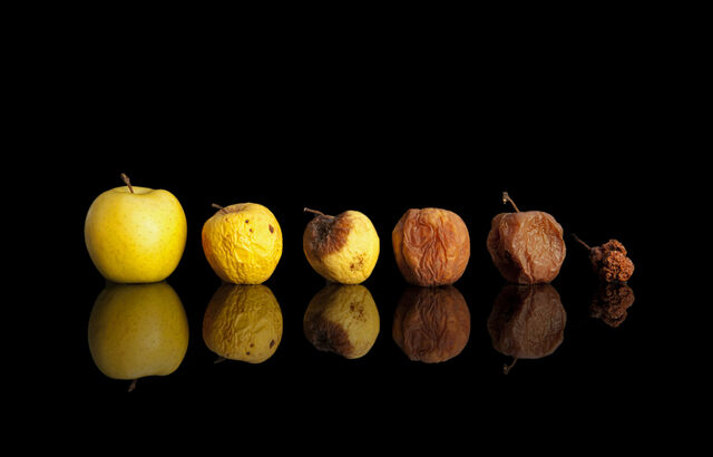 File:Apple-stages-of-decay.jpg