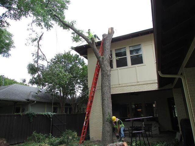 File:Dallas Tree Removal - 214- 556-5079.jpeg