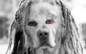 File:Dread dog.jpg