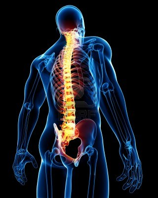 File:Spine-anatomy.jpg