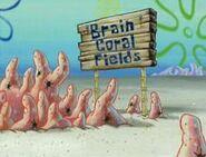 BrainCoralFields