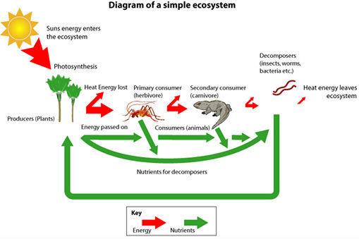 File:Ecosystem.jpg