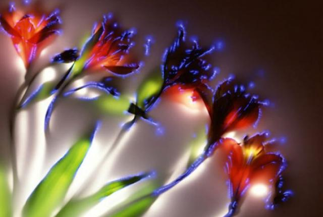 File:Beautiful Plants.jpg