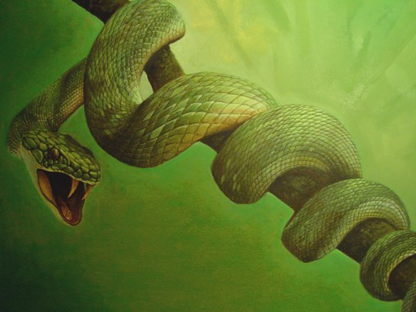 File:Green snake by isabelritter.jpg