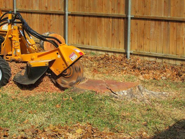 File:Dallas Tree Removal - Dallas Tree Service - 214- 556-5079 - DFW Tree Removal.jpeg