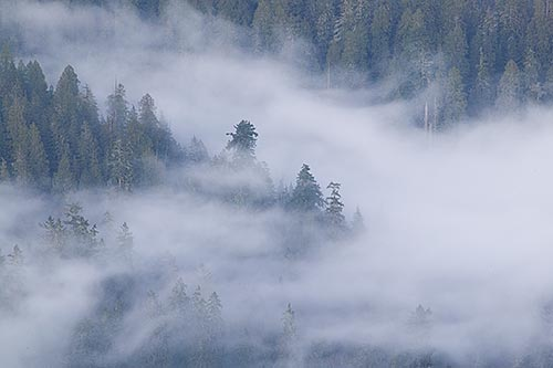 File:Foggy-forest-valley.jpg