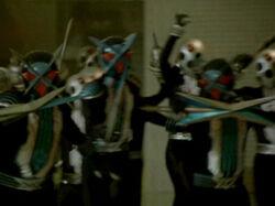 SPD Blue-Head Trio