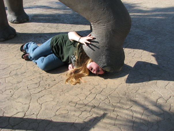 File:08 Me crushed by mammoth at SD Zoo.jpg